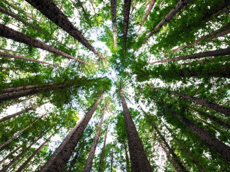 La importancia de cuidar los bosques: reduciendo el impacto ambiental